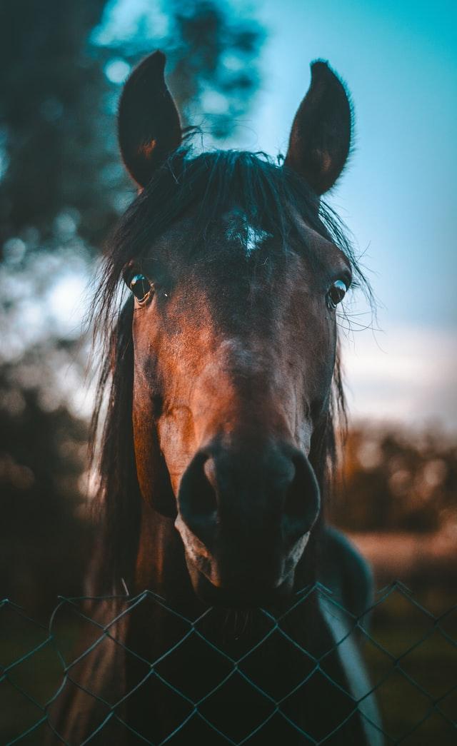 Equi By Beccs - Skånse bästa häst terapeut och hästmassör.