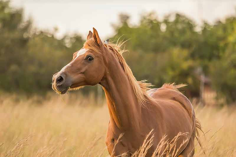 Hästmassage terapi i Skåne med Equi ByBeccs - Hästterapeut