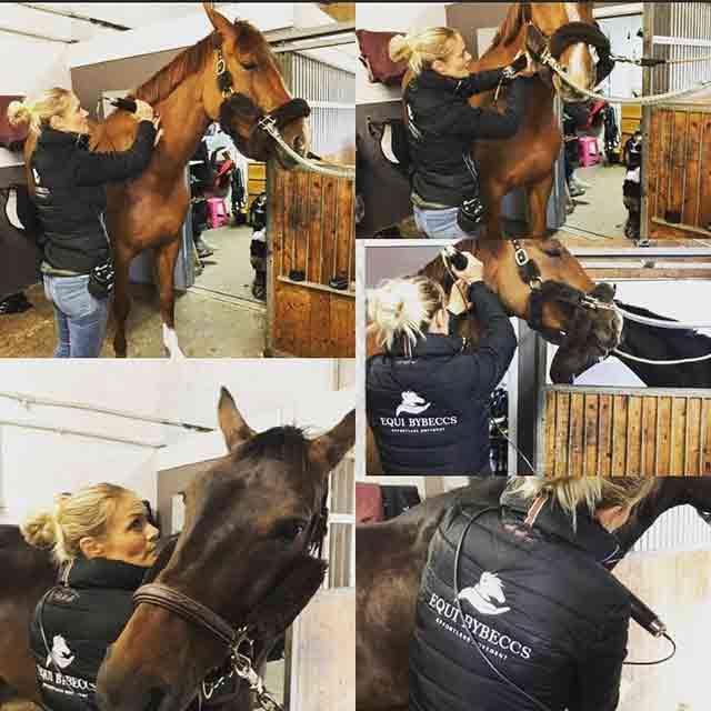 Djupvågsbehandling och djupvågsmassage för häst som massage och massage för bindväv på häst genomförs i Vellinge kommun - Höllviken - SKanör och Falsterbo och södra skåne