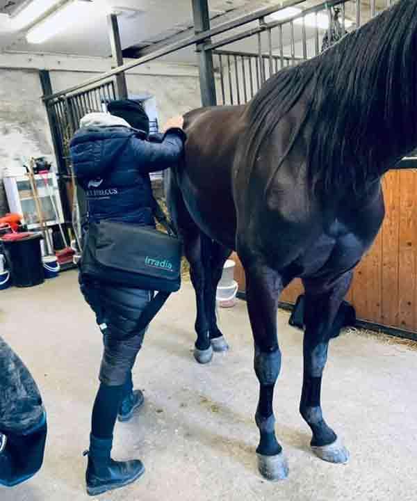 Hästmassage med certifierad hästmassör i Vellinge kommun - Trellebrogs kommun - Malmö kommun och Södra Skåne genomförs av EquiByBeccs