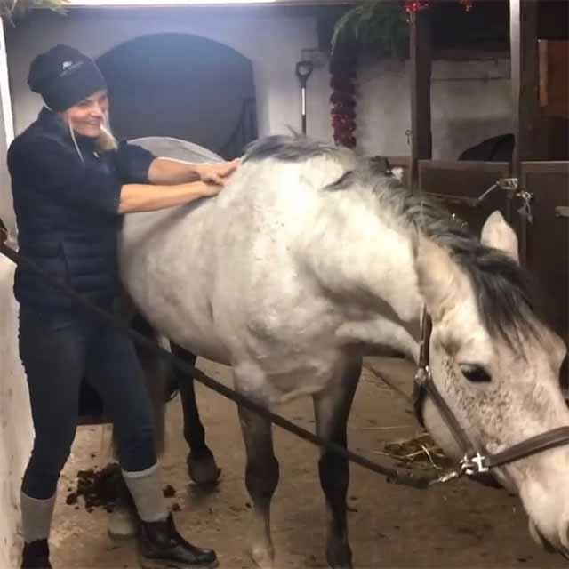 Vad gör en Hästmassör - hästmassage med Malmö - Höllviken - Trelleborg - Vellinge - Svedala och Falsterbo som upptagningsområde i Skåne