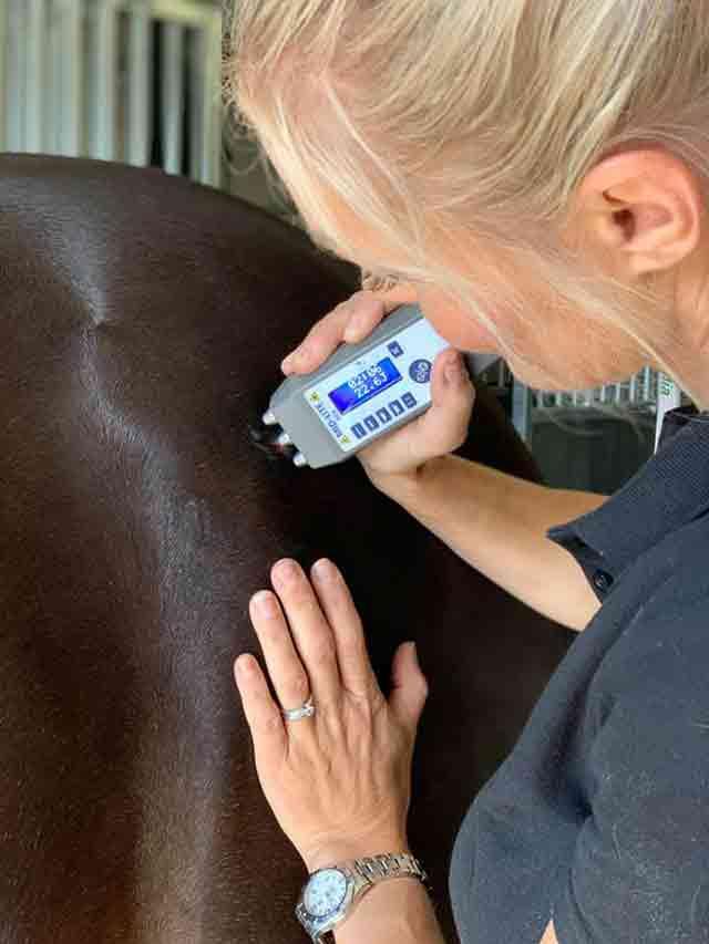 laserbehandling häst - Höllviken - Skanör - Falsterbo - Vellinge - Malmö och Trelleborg - Skåne - Medicinsk laser är en bra behandling som läker och minskar smärta från bristningar och leder