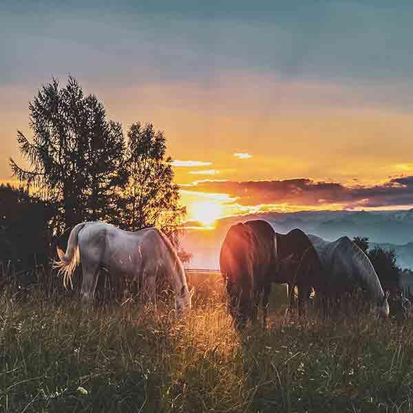 Hållbar häst under höst -och vinterhalvåret