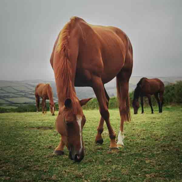 Uppbyggnad av häst - Hästterapeut och hästmassör